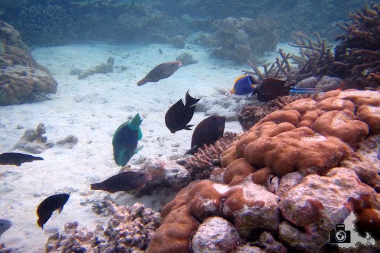 Fische am Riff unter Wasser, Ukulhas, Malediven