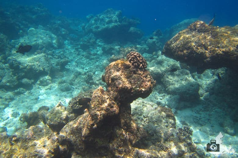 Riff unter Wasser, Ukulhas, Malediven
