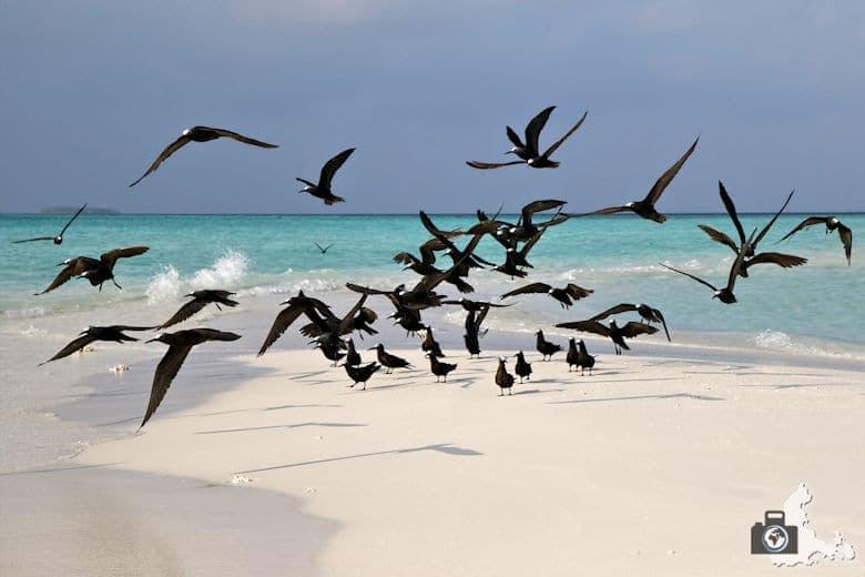Malediven Vögel auf Sandbank