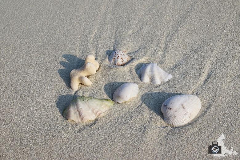 Muscheln im Sand auf den Malediven