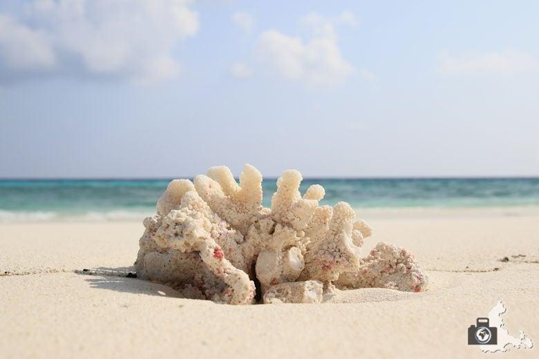 Ukulhas Malediven - Koralle am Strand