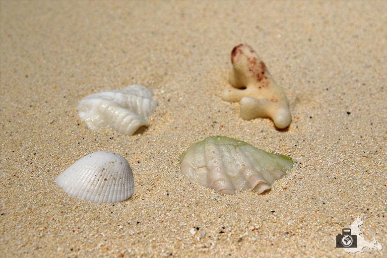 Muscheln im Sand am Strand von Ukulhas auf den Malediven