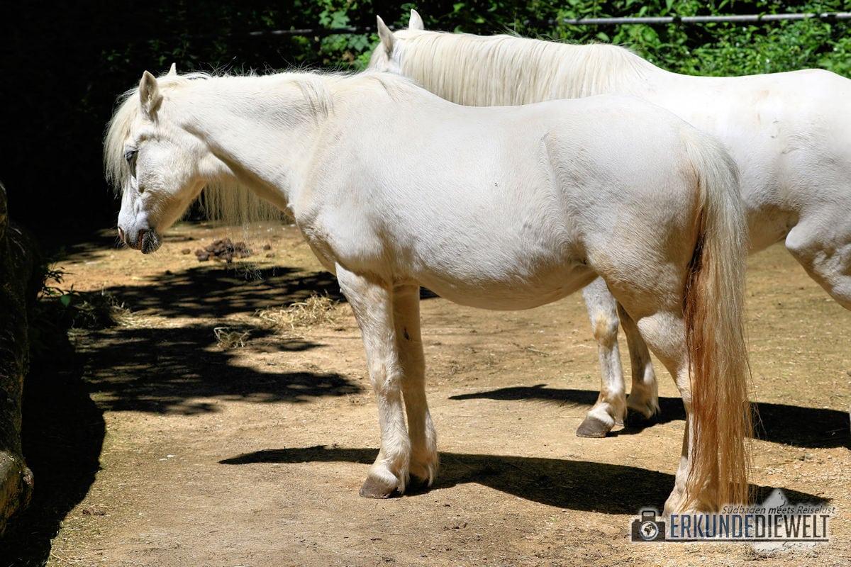 Weiße Pferde | Zoo Basel, Schweiz