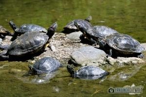 Schildkröten   Zoo Basel, Schweiz