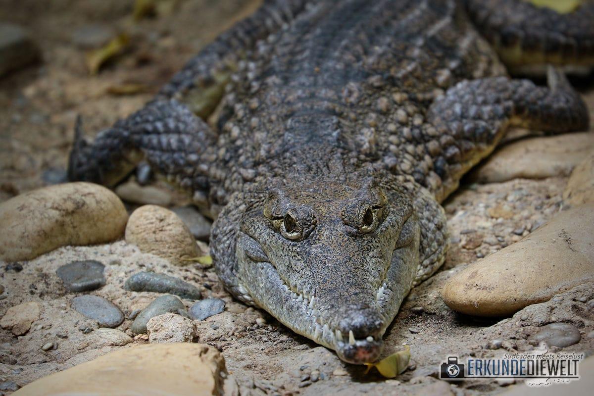 Krokodil | Tierpark Hagenbeck, Hamburg, Deutschland