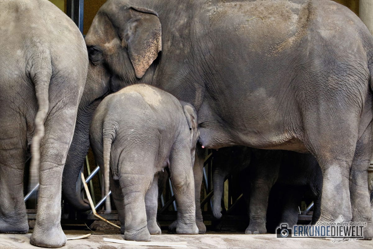 Elefanten | Tierpark Hagenbeck, Hamburg, Deutschland