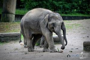 Elefanten Nachwuchs   Tierpark Hagenbeck, Hamburg, Deutschland
