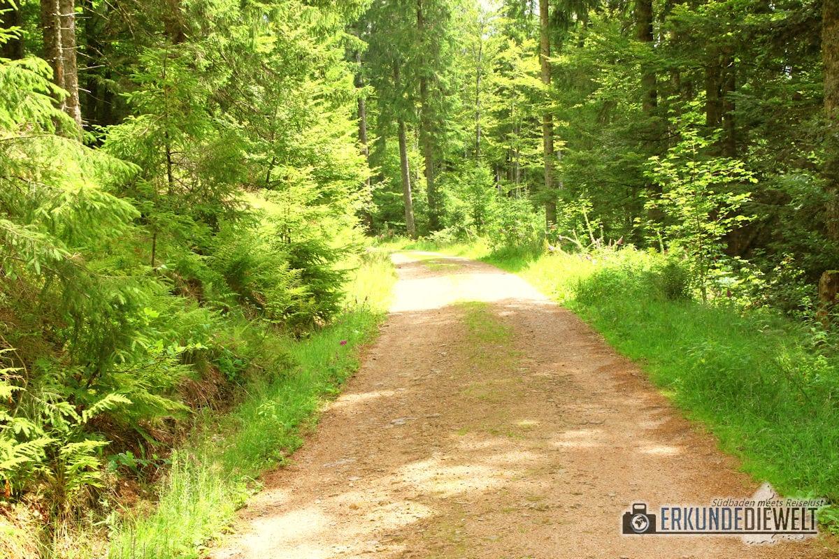 Wanderweg im Wald, Schwarzwald, Deutschland
