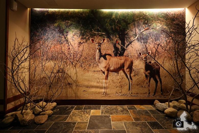Lindner Park-Hotel Hagenbeck Hamburg - Afrika Etage