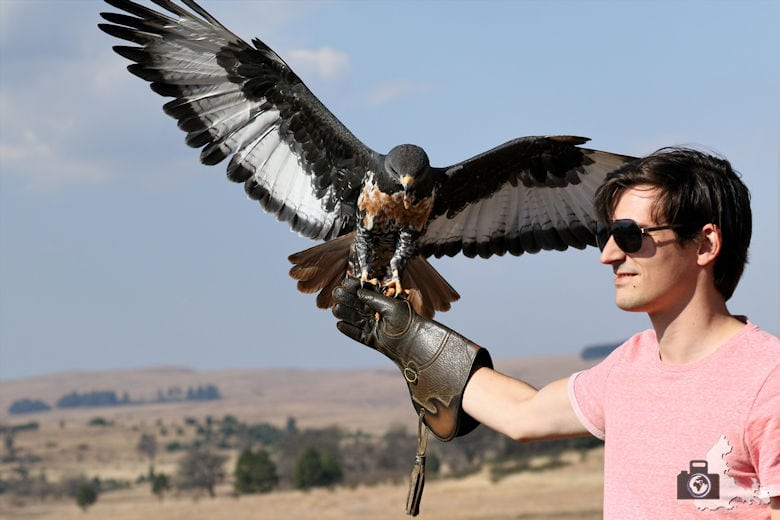 Dullstroom Bird of Prey & Rehabilitation Centre - Falke im Flug