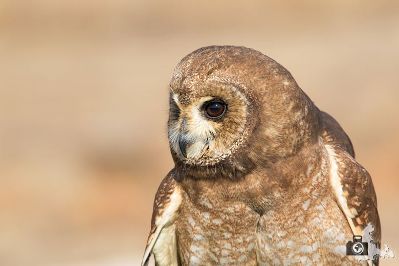 Dullstroom Bird of Prey & Rehabilitation Centre - Eule