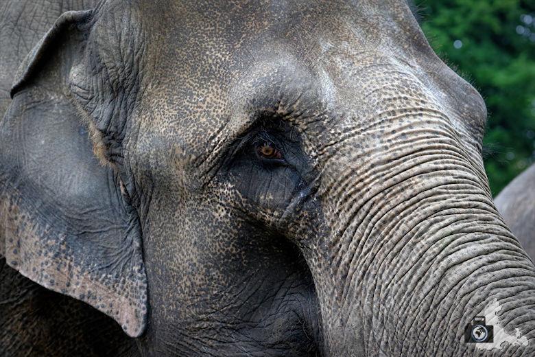 Elefant im Tierpark Hagenbeck in Hamburg