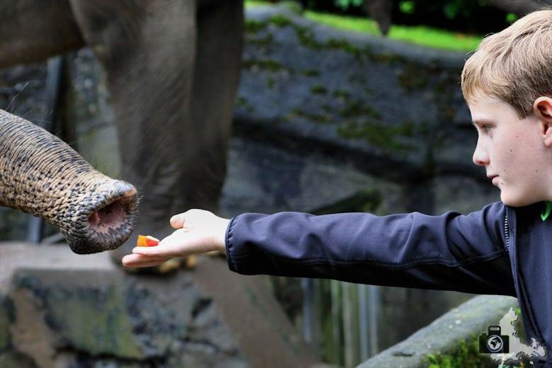 Elefant füttern im Tierpark Hagenbeck in Hamburg