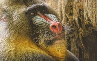 Tierpark Hagenbeck in Hamburg und weitere Sehenswürdigkeiten