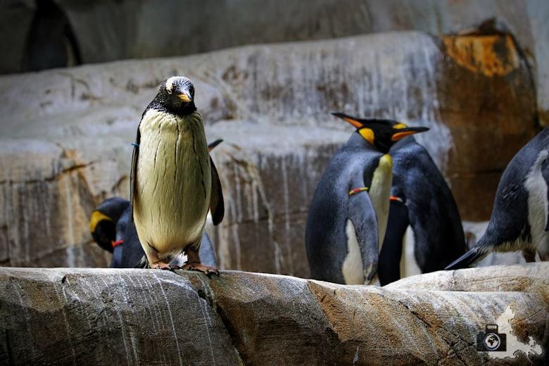 Pinguine im Tierpark Hagenbeck in Hamburg