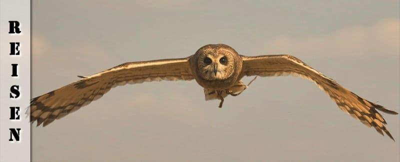 Reisebericht - Von Johannesburg nach Dullstroom ins Bird of Prey & Rehabilitation Centre