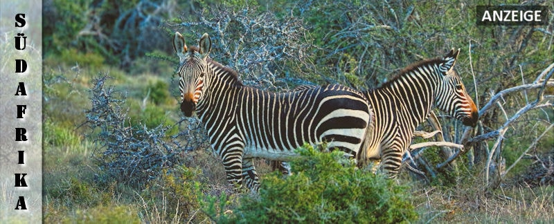 suedafrika-reisefazit-wanderlust-africa