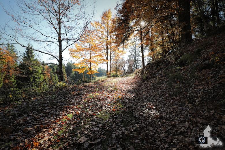 Ibacher Panoramaweg - Laub im Herbst