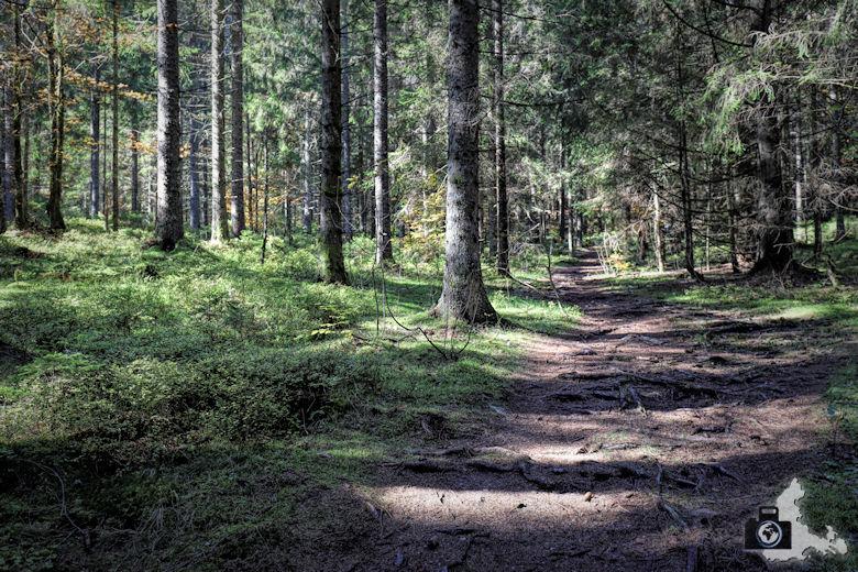 Ibacher Panoramaweg - Waldweg