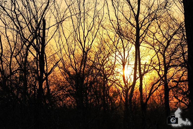 Auf Safari - Sonnenuntergang