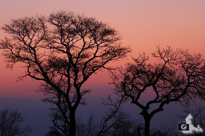 Auf Safari - nach Sonnenuntergang