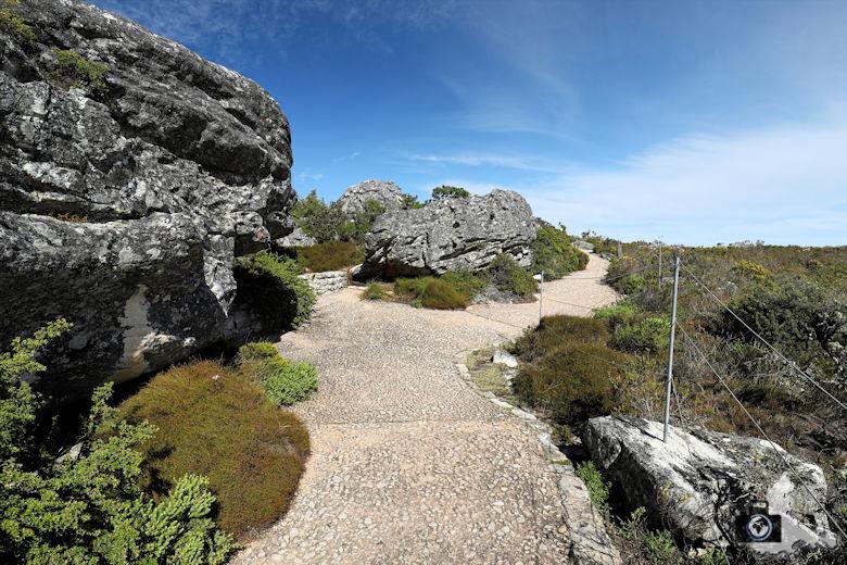Kapstadt - Wandern auf dem Tafelberg
