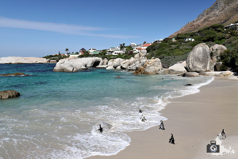 Südafrika - Pinguine am Boulders Beach