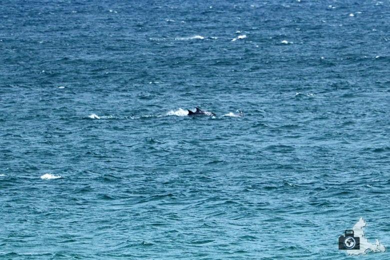 Wale und Delfine beobachten in Hermanus