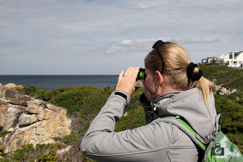 Wale beobachten in Hermanus