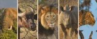 Afrikas Big Five - Büffel, Elefant, Löwe, Leopard und Nashorn