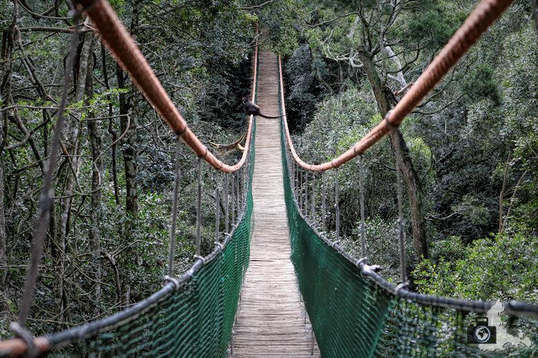 Monkeyland, Garden Route, Südafrika - Hängeseilbrücke