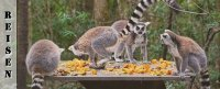 Monkeyland, Birds of Eden, Tsitsikamma Village Inn - Reisebericht Südafrika