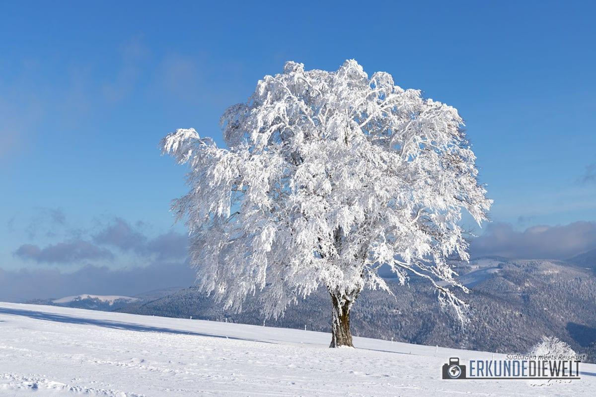 Beispielbild Canon 24-70 L IS USM - Baum im Winter