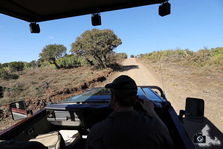 Game Drive auf Kuzuko im Addo Elephant Nationalpark
