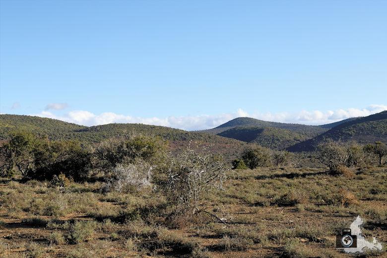 Landschaft im Addo Elephant Nationalpark