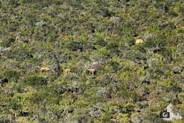 Elefanten im afrikanischen Busch Afrikas