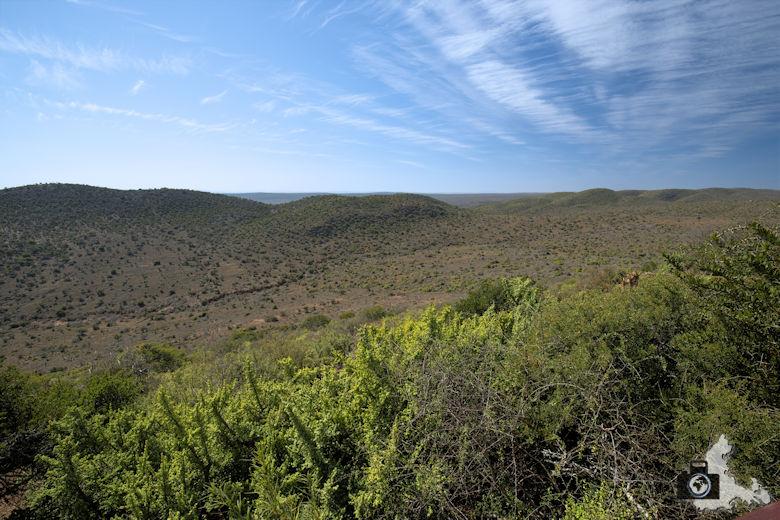 Afrikanischer Busch im Addo Elephant Nationalpark in Südafrika