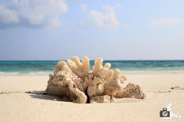 Fotografie Tipps - Koralle als Vordergrundmotiv