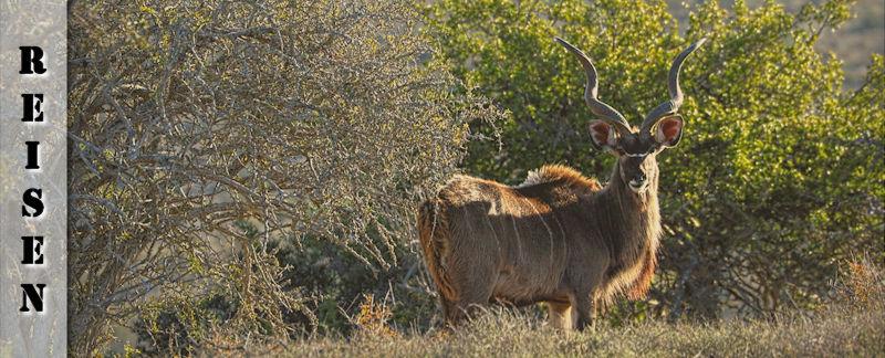 Reisebericht - Anfahrt zur Kuzuko Lodge im Addo Elephant Nationalpark