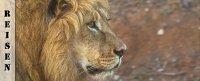 Reisebericht Kuzuko Lodge Südafrika - Löwen und Elefanten im Addo Elephant Nationalpark