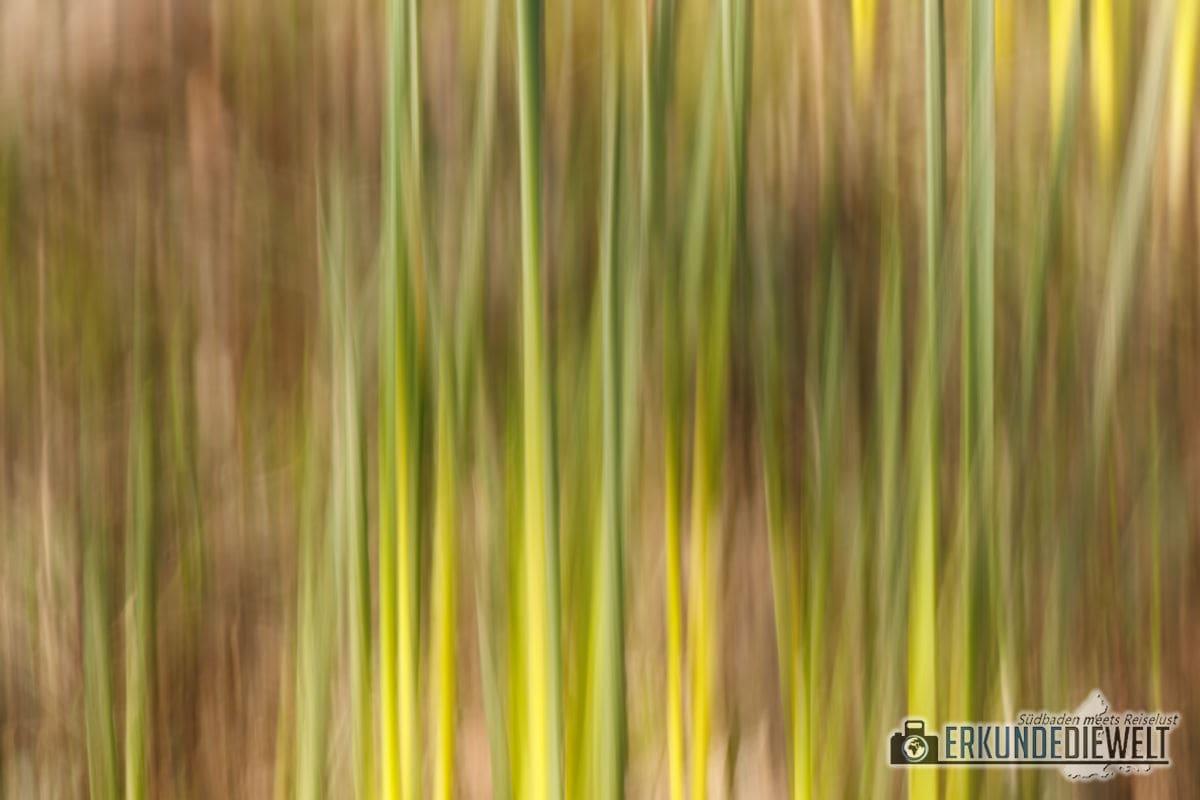 Beispielbild Canon EOS 800D - Seepark Freiburg