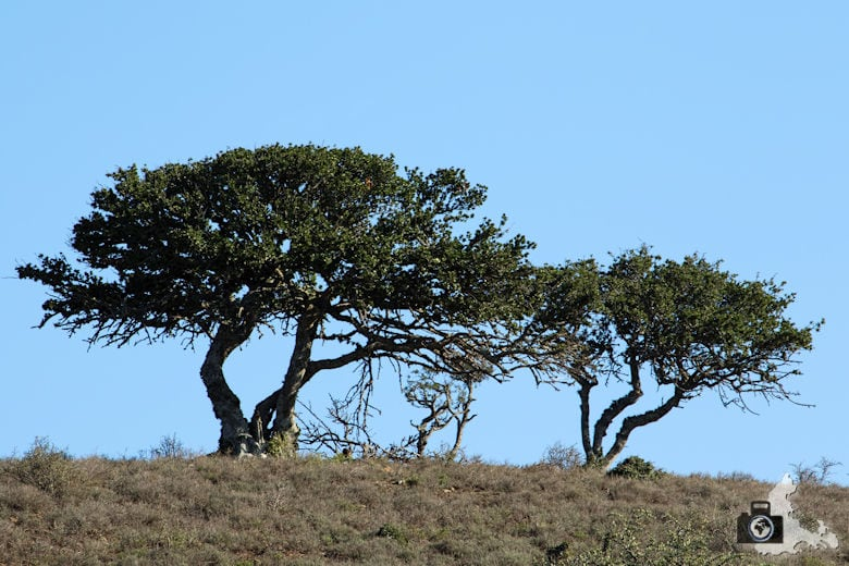 Landschaft im Addo Elephant National Park