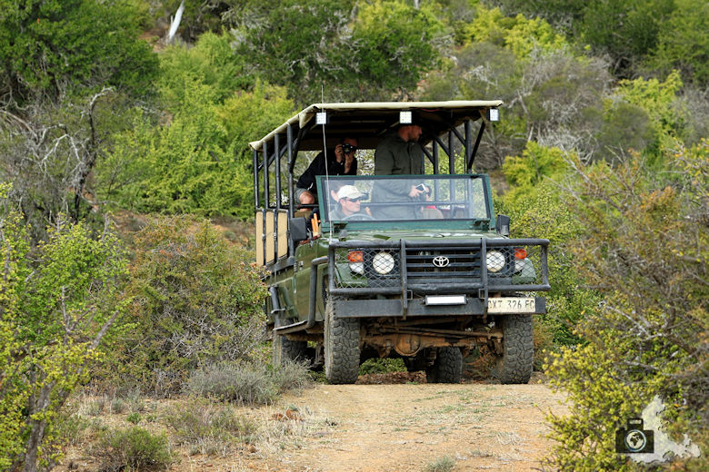 Safari Jeep im Addo Elephant National Park
