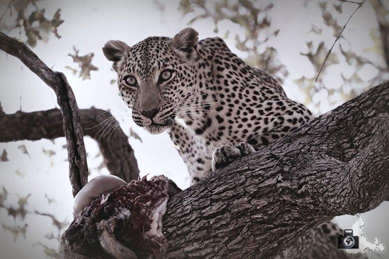 Reisefotografie - Fotografie Tipp - Geduld haben - Südafrika