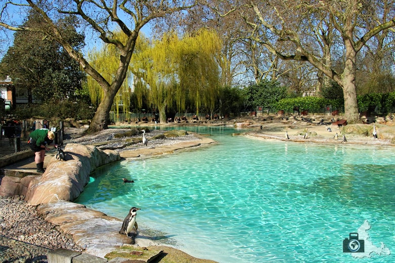 London Zoo - Pinguine