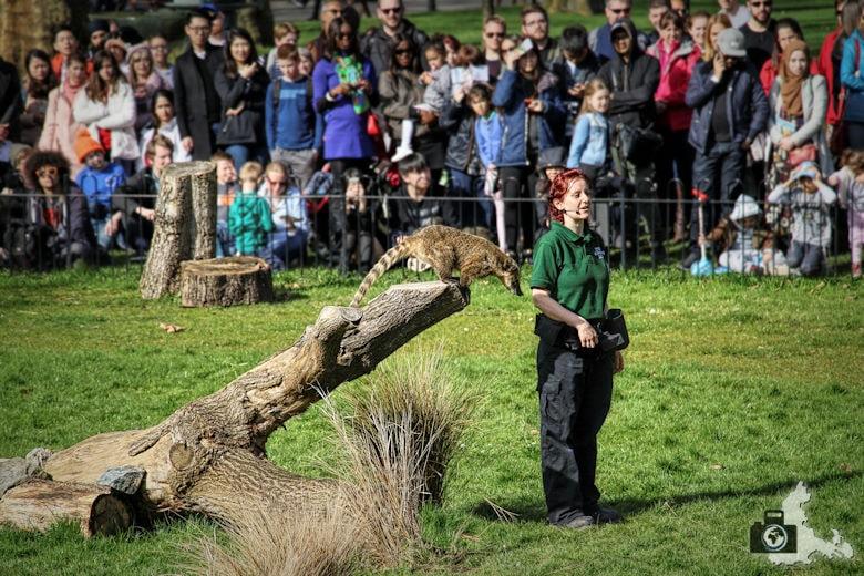 London Zoo - Vorführung