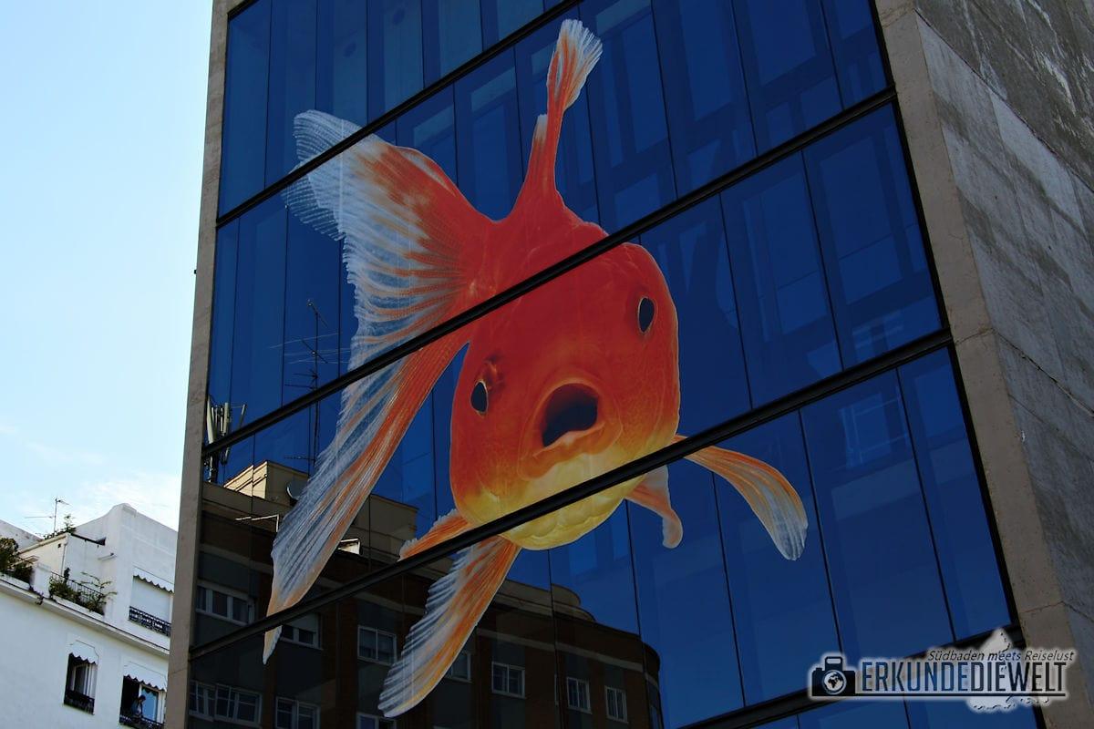 Fisch, Madrid, Spanien