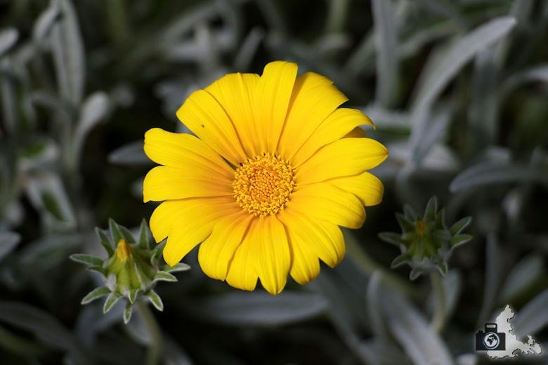 Blume im Königlichen Botanischen Garten in Madrid
