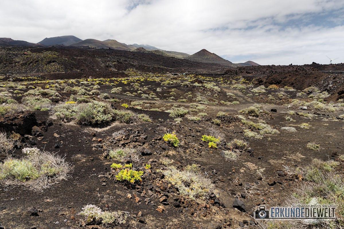 Lava Landschaft, Los Canarios, La Palma, Kanaren