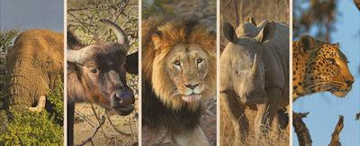 The Big Five Südafrika